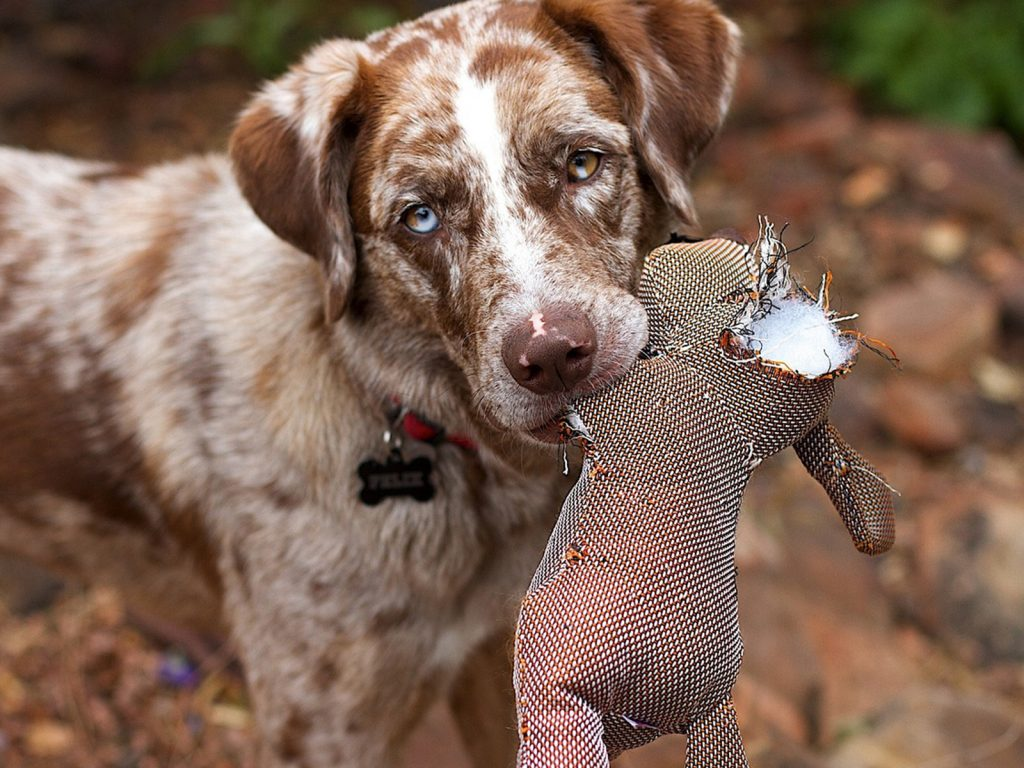 Juguetes malos para perros: todo lo que debes saber