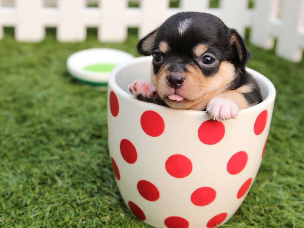 perro en taza