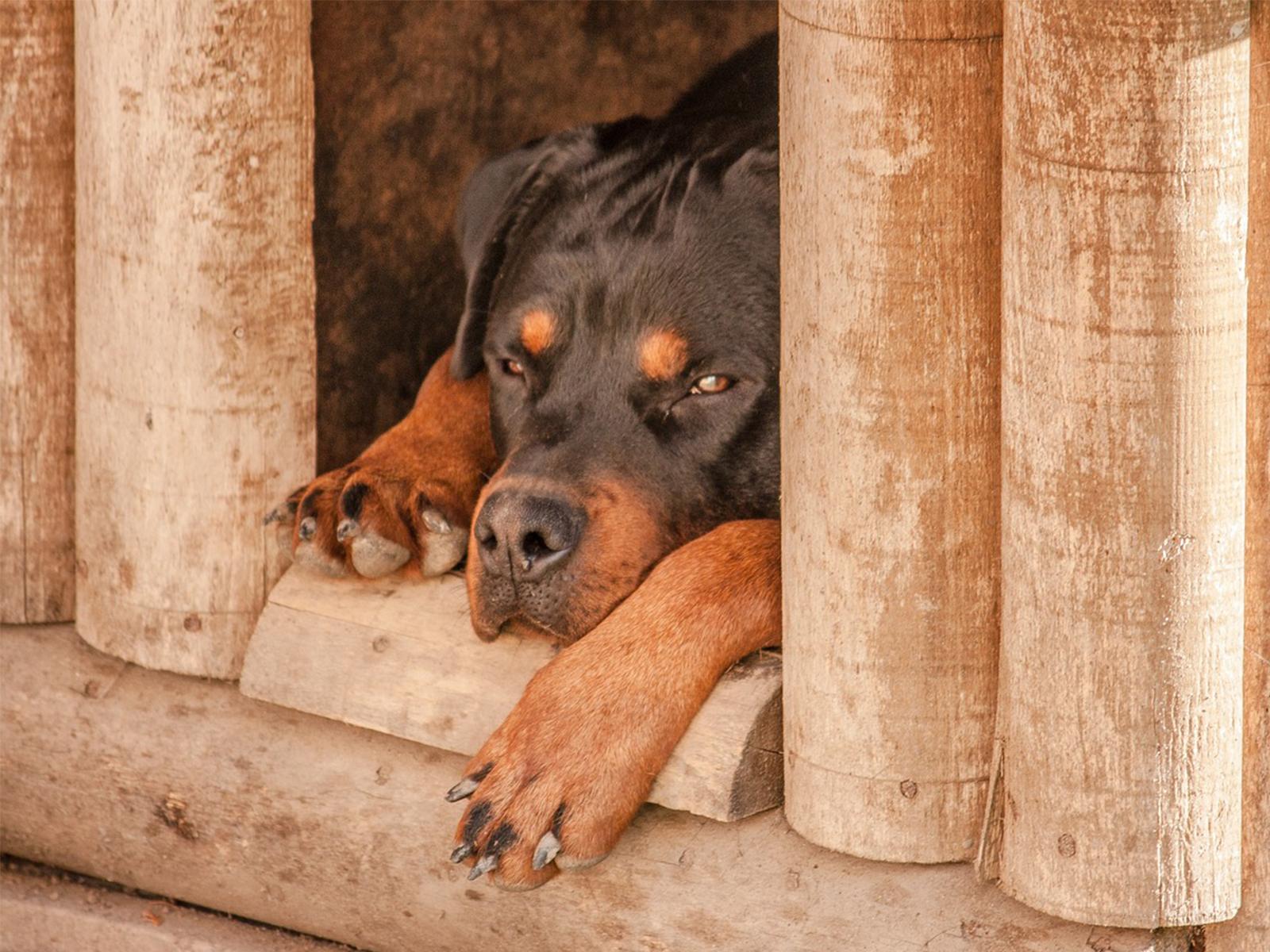 https://www.redcanina.es/todo-sobre-las-croquetas-para-perros/