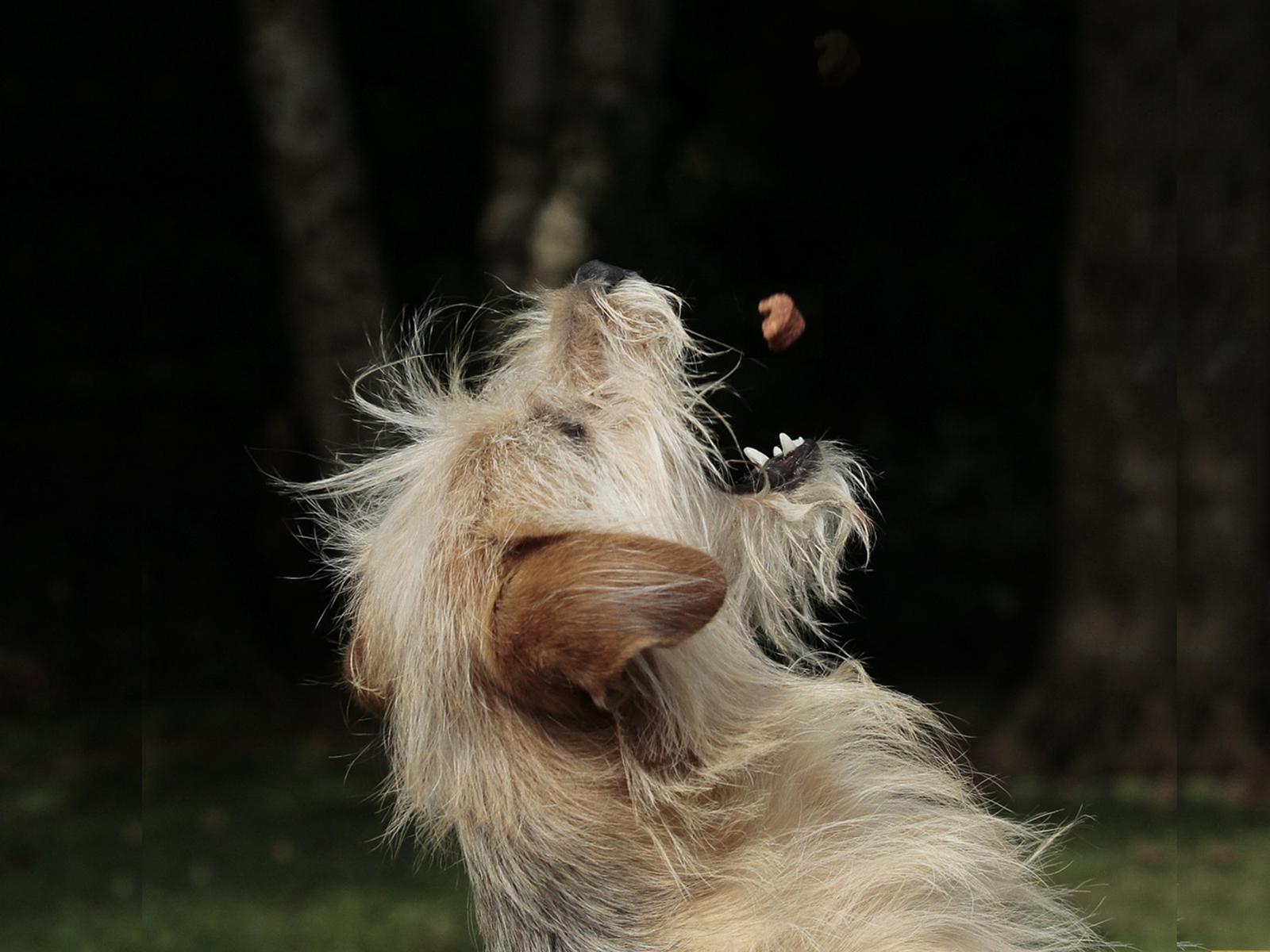 Piensos De Conejo Y Patata Para Perros