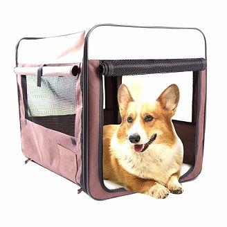cama-portatil-plegable-perro-ciego