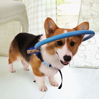 arnés-protector-perro-ciego