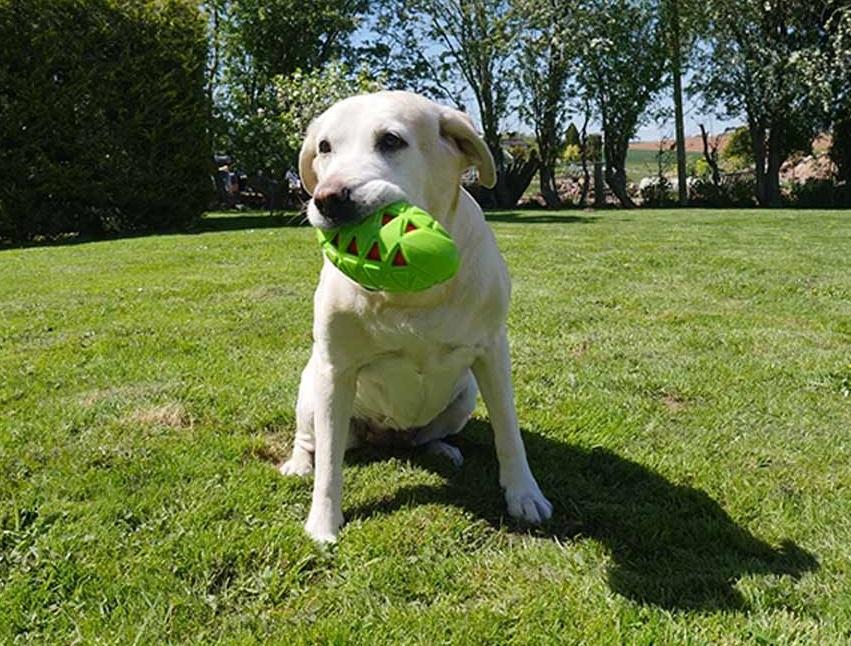 Los juguetes más duros y resistentes para tu perro