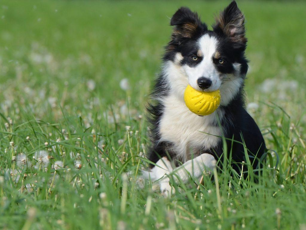 vinagre de manzana para el mal aliento de los perros