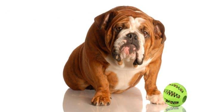 Los Mejores Productos De 2019 Para Prevenir O Tratar El Sobrepeso En Perros
