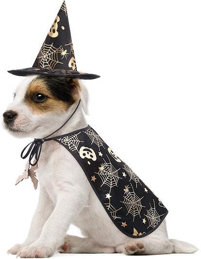 Disfraz de perro con un sombrero de bruja y capa