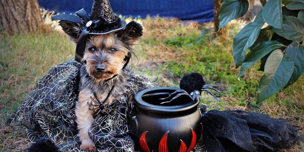 Disfraces divertidos De Halloween Para Perros