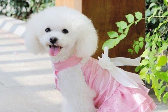 Ropa Para Perros: Guía Definitiva