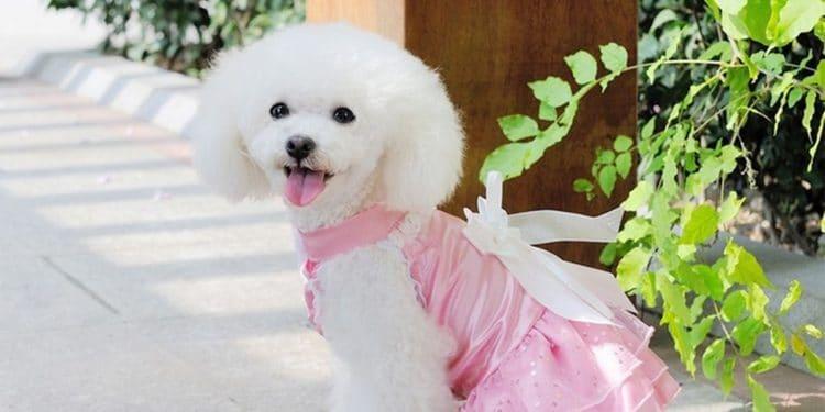 Ropa Para Perros Cómo Vestir A Tu Mascota En Verano Y En