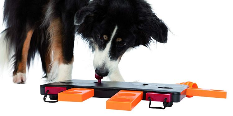 Los Mejores Puzles O Rompecabezas Para Perros