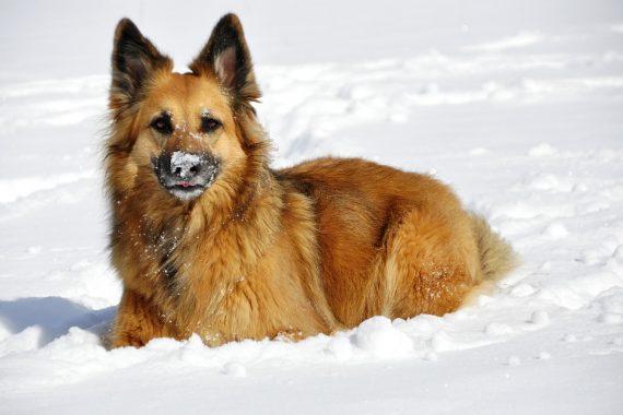 Nieve Y Perros: Todo Lo Que Debes Saber
