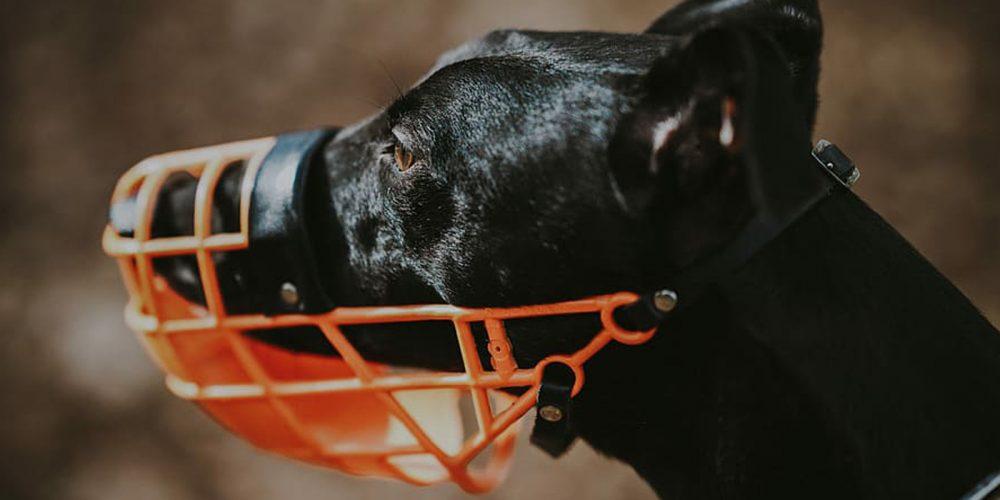 Los Mejores Bozales, Seguros Y Cómodos, Para Tu Perro