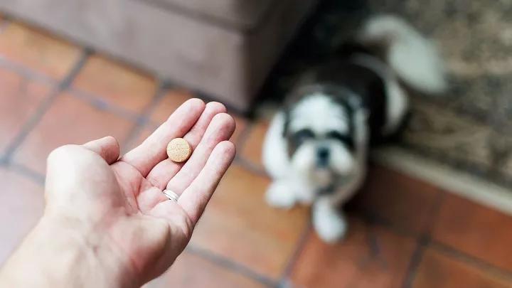 Los Mejores Probióticos Para Perros