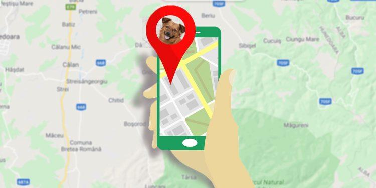 Ranking Con Los Mejores GPS Para Perros