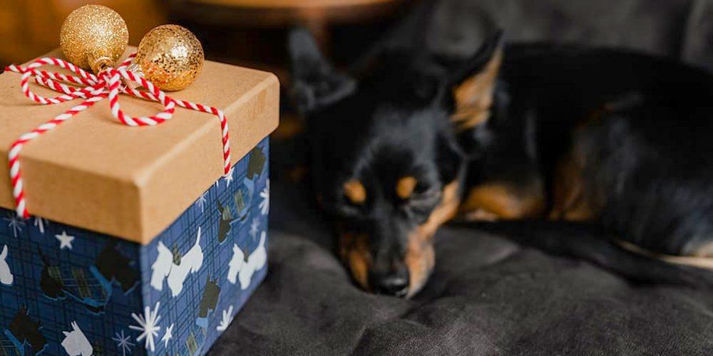 Regalos Baratos Y De Calidad Para Perros