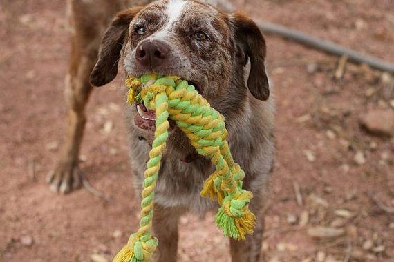 Comparativa Entre Los Mejores Mordedores Para Perros