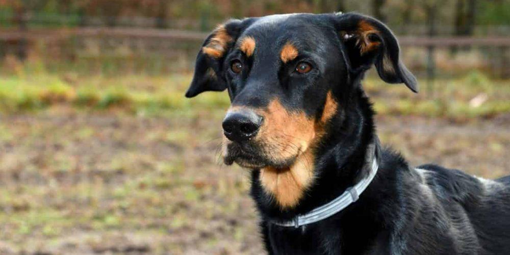 Mejores Collares Antiparasitarios Para Perros 2020