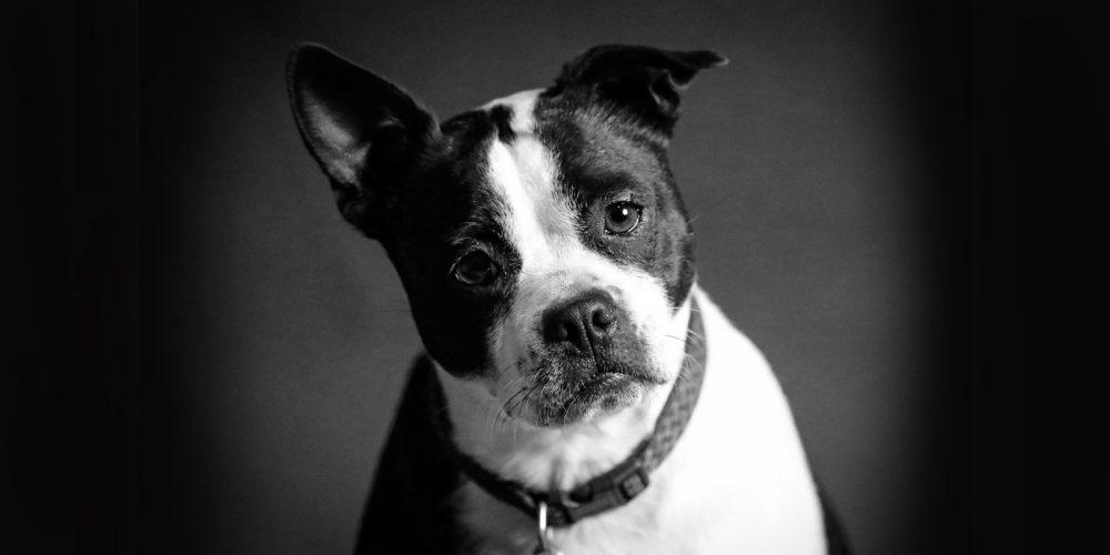 Ansiedad En Perros: Causas, Síntomas Y Soluciones