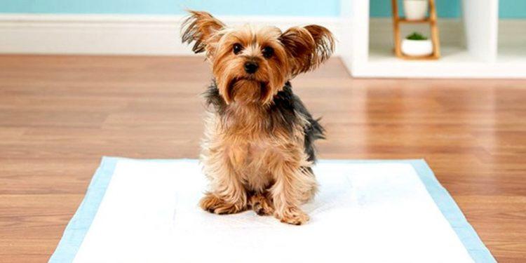 Top 4 Mejores Empapadores Desechables Para Perros 2020