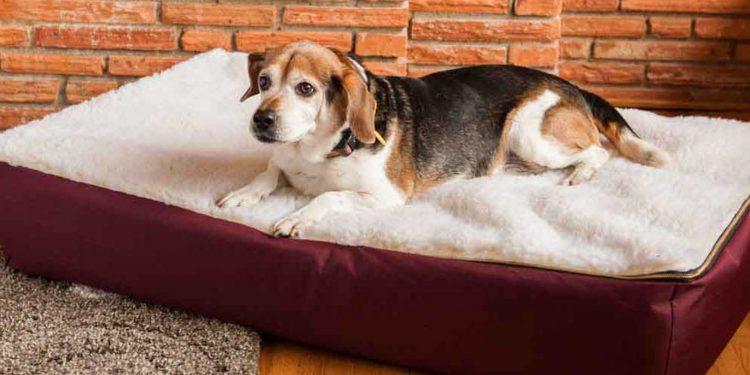Las Mejores Camas Ortopédicas Para Perros