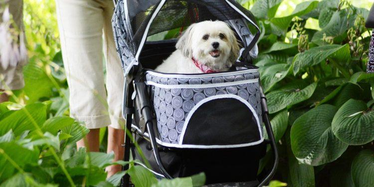 Los Mejores Carritos Para Perros Pequeños