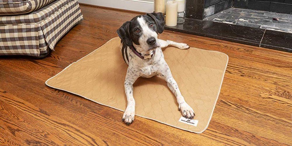 Mejores Empapadores Reutilizables Para Perros En 2020