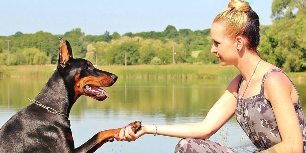 Qué Puedo Hacer Para Que Mi Perro Me Obedezca