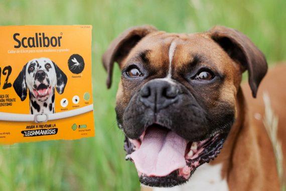Ranking De Los Mejores Antipulgas Para Perros