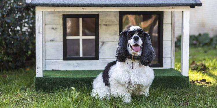 Las Mejores Casetas Para Perros De Madera De Exterior