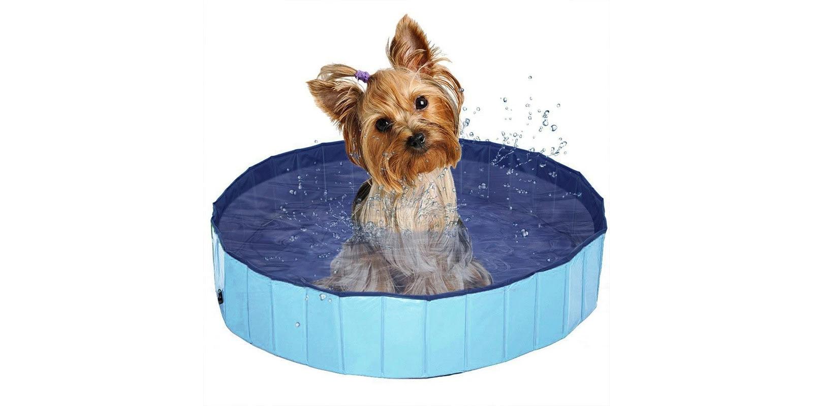 Las Mejores Bañeras Y Piscinas Para Perros Medianos Y Pequeños