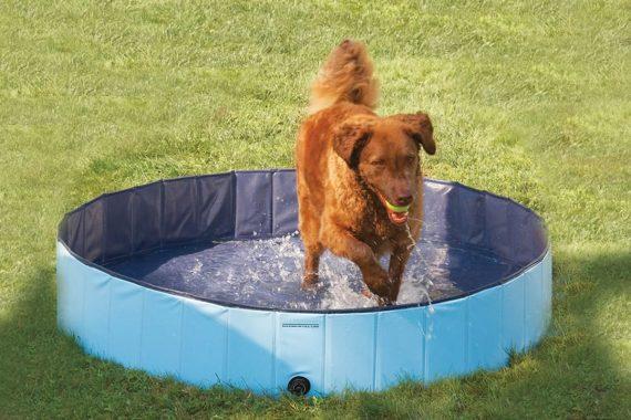 Las Mejores Bañeras Y Piscinas Para Perros Grandes