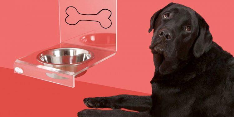Qué Hacer Si Mi Perro No Quiere Tomar Agua