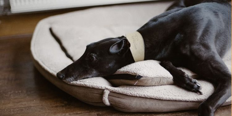 Las Mejores Colchonetas Para Perros