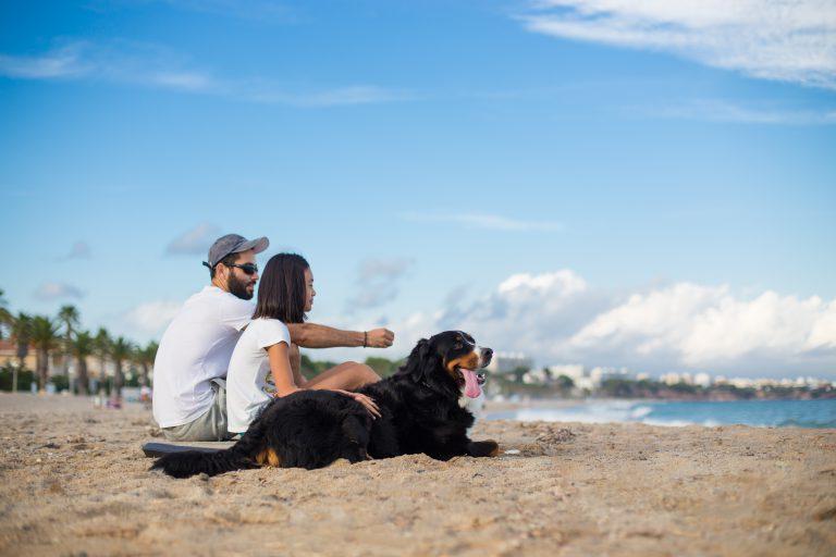 perro en la playa de Punta del Riu en Miami Platja, Mont-roig del Camp Tarragona