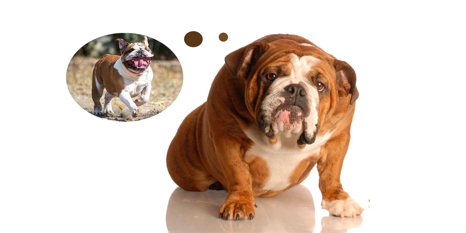 Los Mejores Piensos Light Para Perros