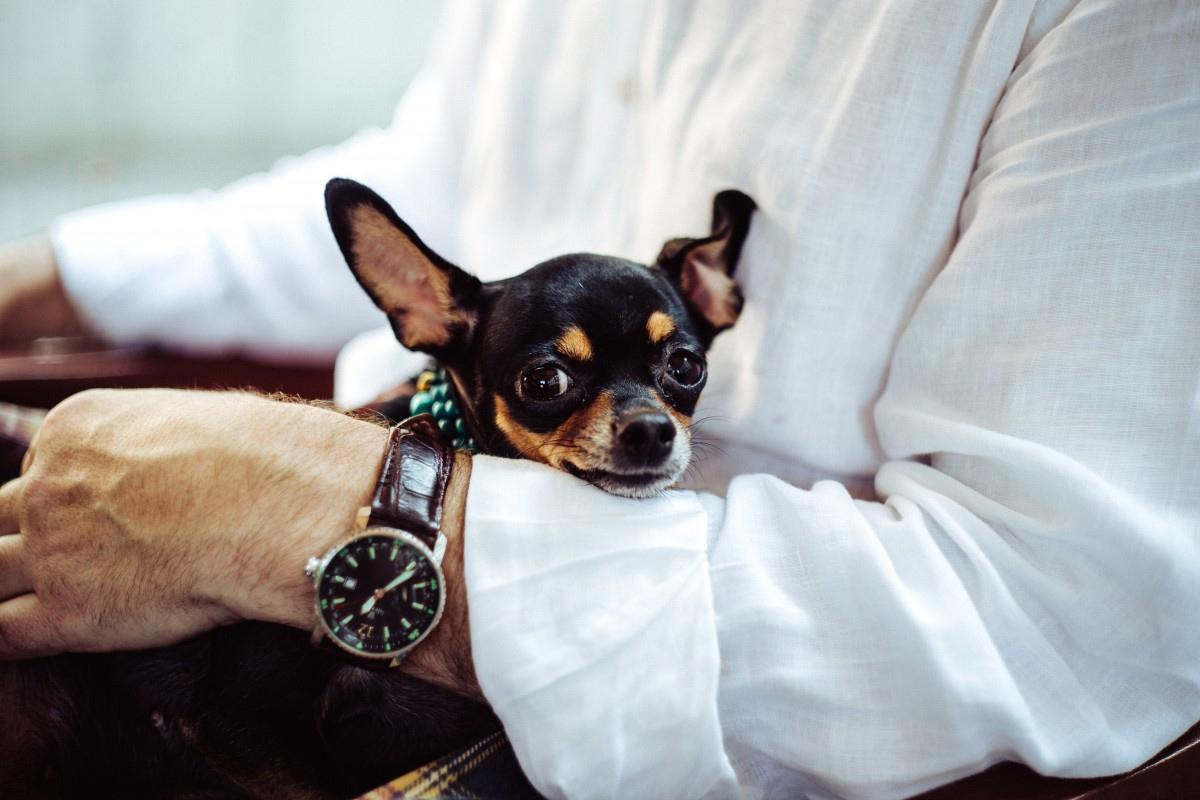 ¿Cuáles Son Las Mejores Razas Para Perros De Compañía?