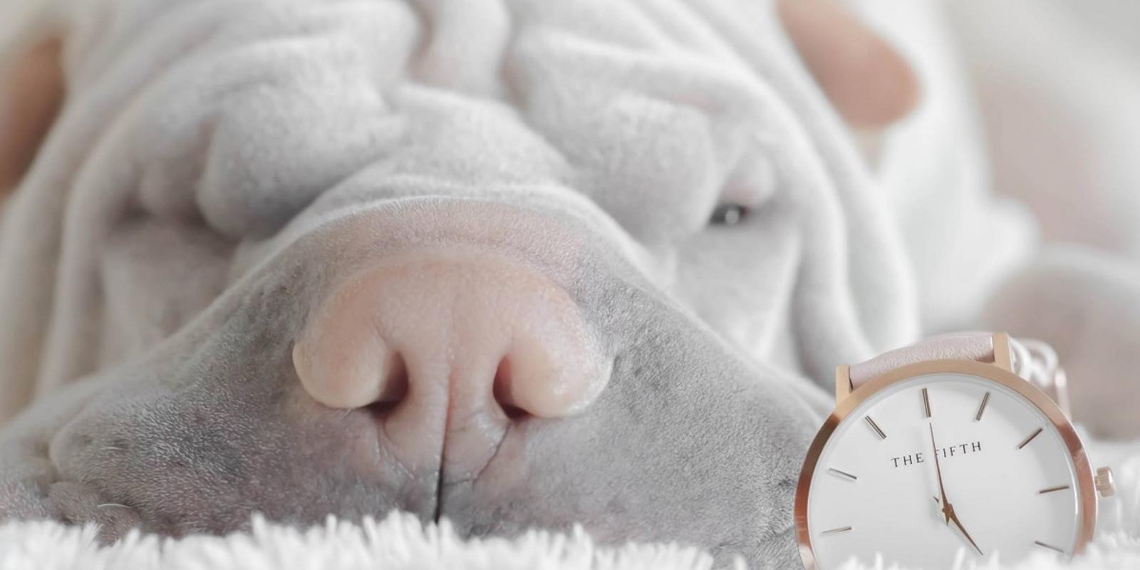 Guía Sobre El Perro Shar Pei. Cuidados Y Características De La Raza