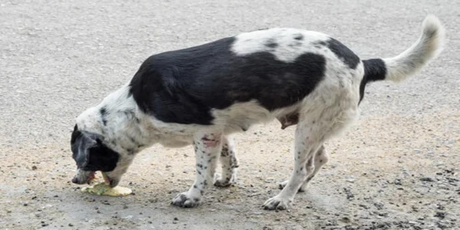 Mi perro vomita espuma amarilla. ¿Qué puedo hacer?