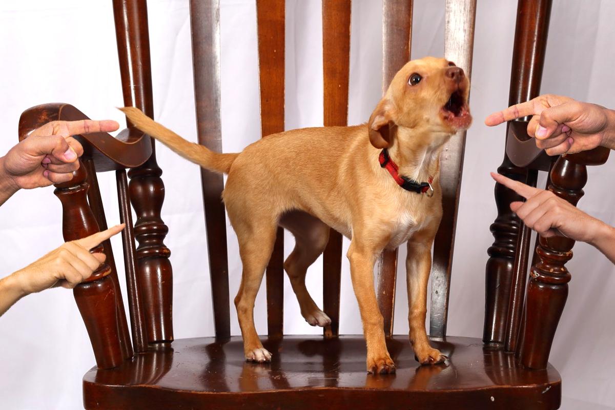 ¿Se puede denunciar a un vecino porque su perro no para de ladrar?