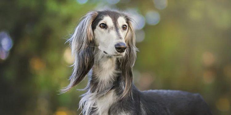 Top 10 razas de perros peludos que te sorprenderán