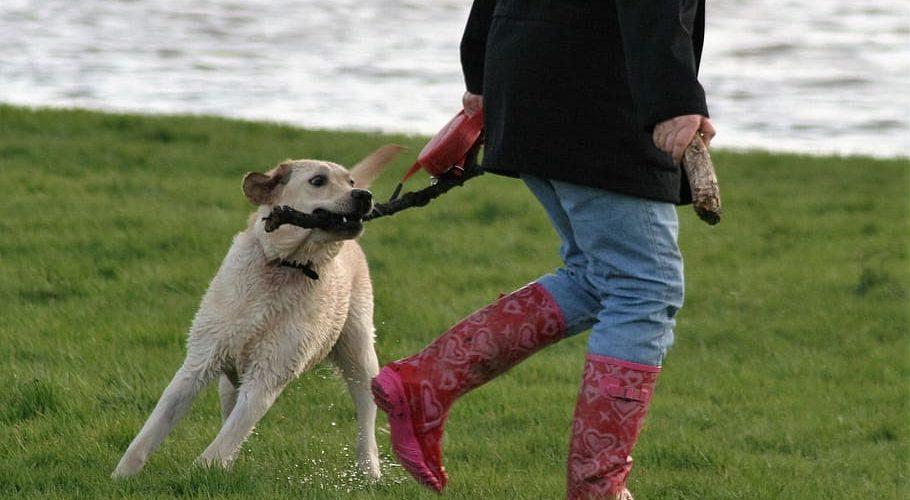 10 juegos para divertirte con tu perro en casa o en el jardín