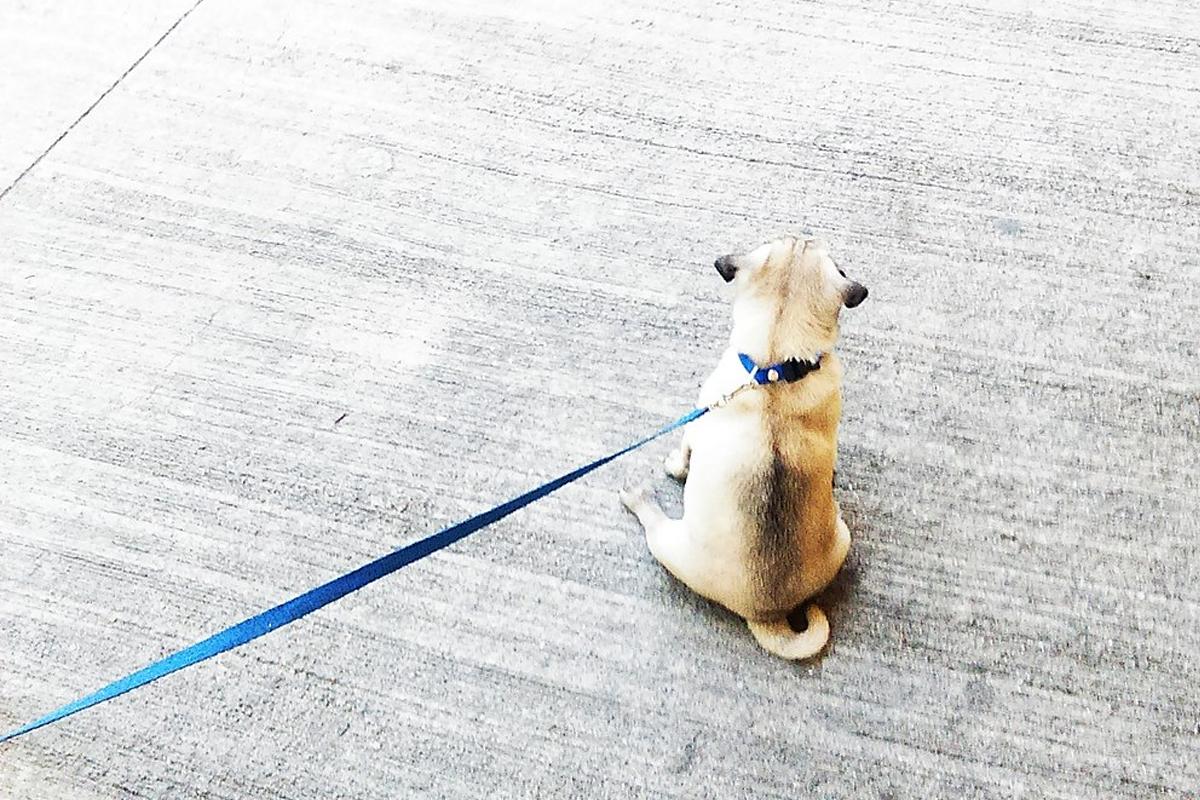 Las mejores correas para perros. Cómo elegir la más adecuada para tu perro