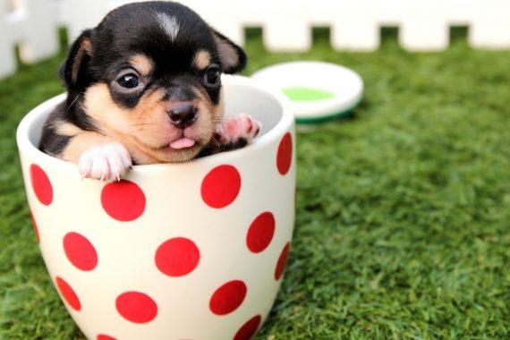 Cómo elegir la mejor leche maternizada para los cachorros