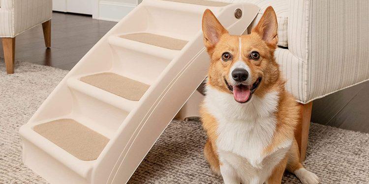 Mejores rampas y escaleras para perros