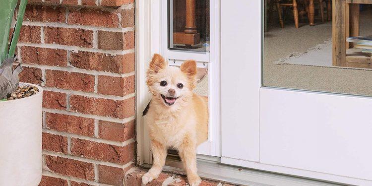 Mejores puertas para perros. Guía para elegir la más adecuada para tu mascota