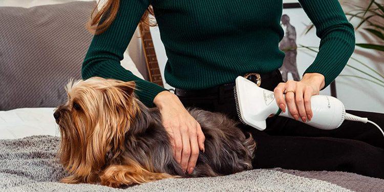 Secadores para perros. Mejores marcas y cómo elegir el mejor