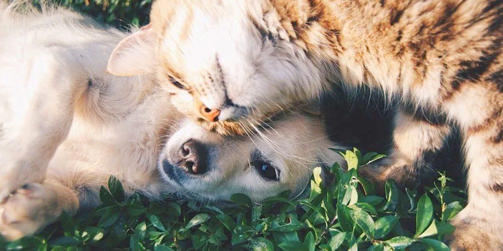Cómo hacer que un perro se lleve bien con un gato