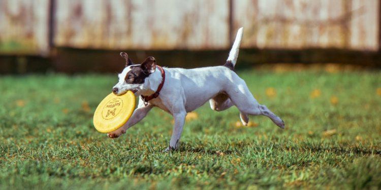 Mejores Frisbees para perros