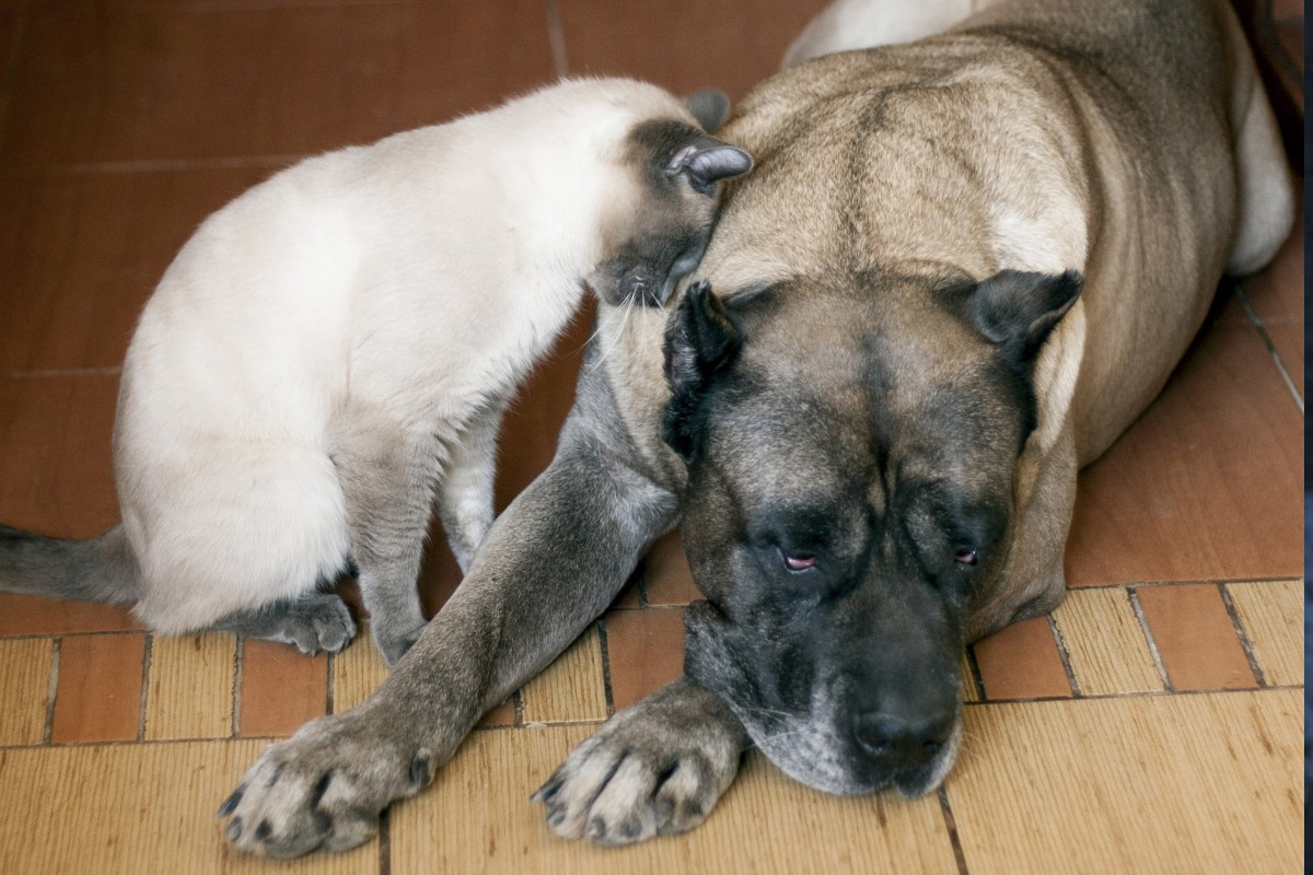 Toxoplasmosis en los perros. Cómo detectarla y cómo se cura