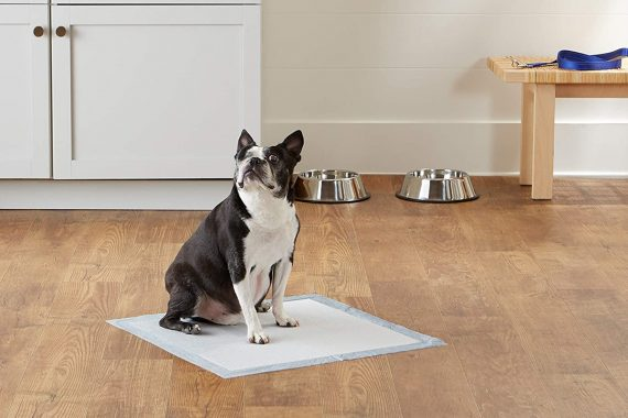 Mejores inodoros para perros